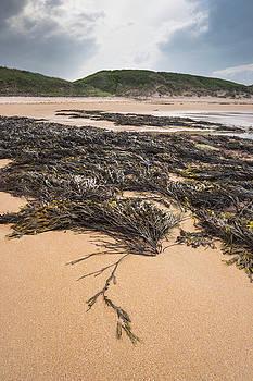 David Taylor - Embleton Bay Seaweed