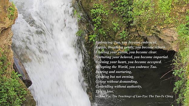 Stephen Dove - Embracing the Tao