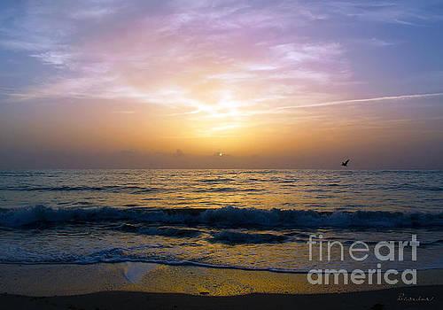Ricardos Creations - Treasure Coast Florida Tropical Sunrise Sescape B3