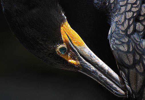 Emerald Eyes by Lorenzo Cassina
