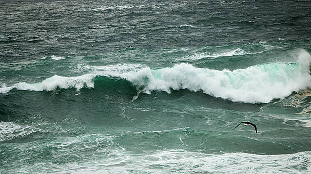 Emerald Seas by Nicole Robinson
