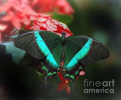Emerald SwallowTail by Arnie Goldstein