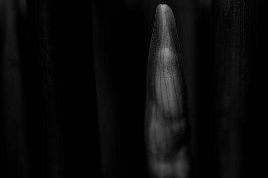 Emergence by Keith Elliott