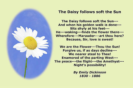 Emily Dickinson Daisy Poetry by Maxwell