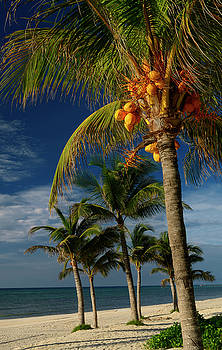 Reimar Gaertner - Empty beach on the Mayan Riviera with coconut palm trees