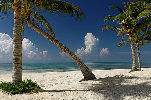 Reimar Gaertner - Empty beach with coconut palm trees in the Mexican Mayan Riviera