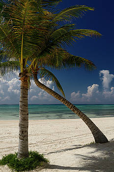 Reimar Gaertner - Empty Mexico Mayan Riviera beach with coconut palm trees