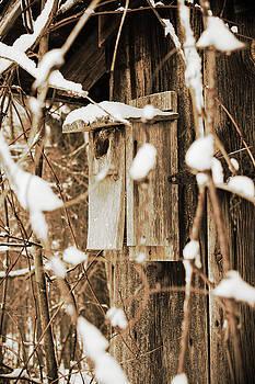 Empty Nest by Amy Layton