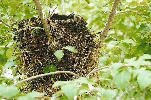 Empty Nest by Patricia Thirion