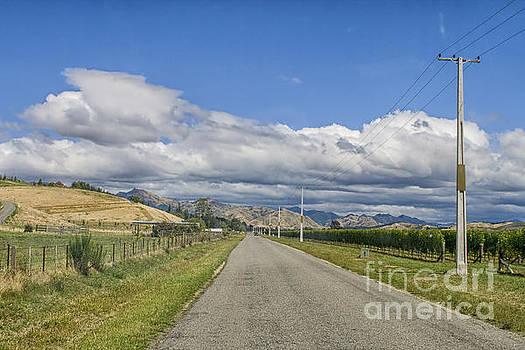 Patricia Hofmeester - Empty rural road through vineyards