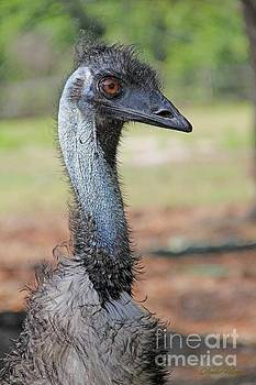 Emu Looking At You by Dodie Ulery