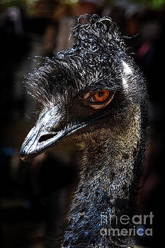Emu Portrait-1 by Barbara Dudzinska