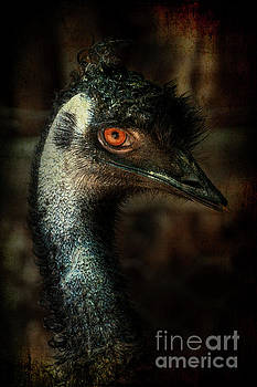 Emu Portrait by Barbara Dudzinska