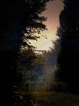 Enchanted Evening 2080820 by Philip A Swiderski Jr