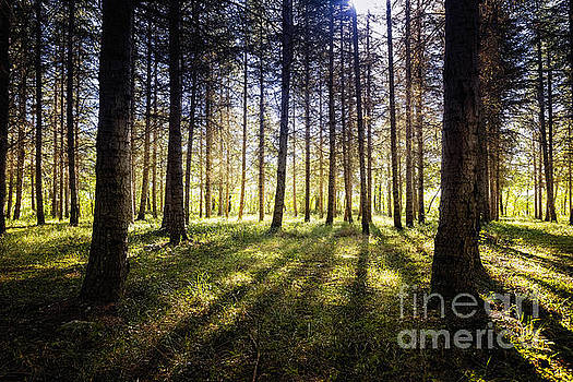 Enchanted Forest 2 by Tony Priestley