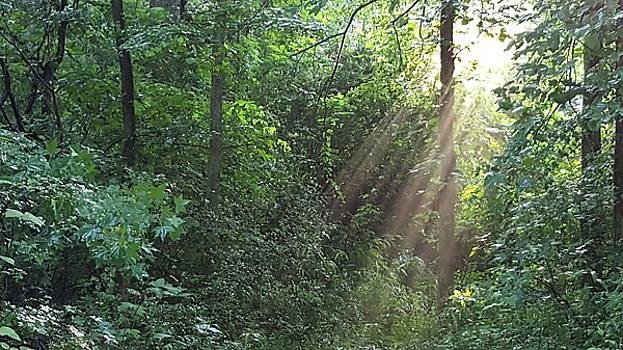 Enchanted Morning by Brenda Stevens Fanning