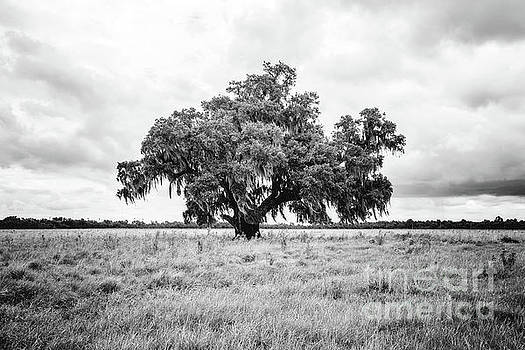 Scott Pellegrin - Enchanted Oak - BW