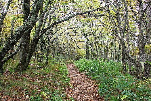 Allen Nice-Webb - Enchanted Pathway