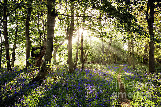 Enchanting bluebell woodland path and sunrise by Simon Bratt Photography LRPS