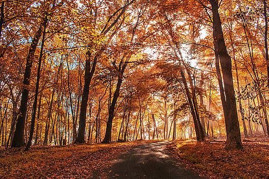 Rima Biswas - Enchanting fall