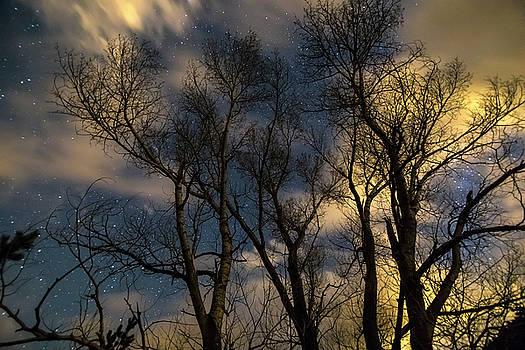 Enchanting Night by James BO Insogna