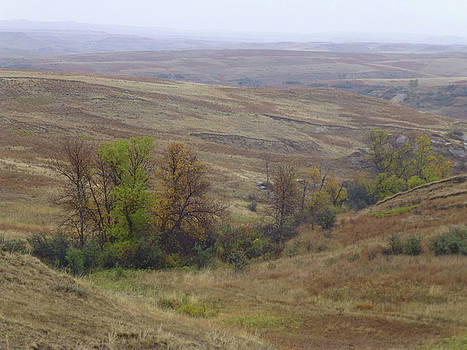 Enchantment of the September Grasslands by Cris Fulton