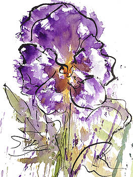 Enclosed in ink-Pansy by Garima Srivastava