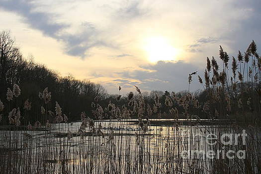 End of Day at the Lake by Dora Sofia Caputo Photographic Art and Design