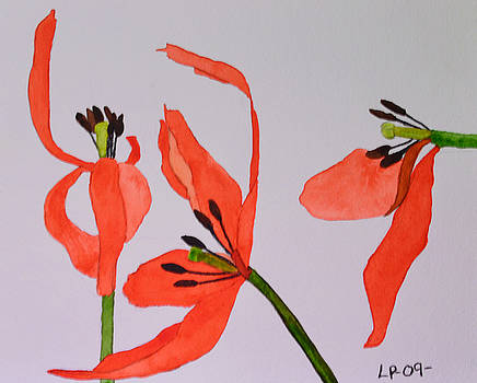 End of Season Tulips by Lisa Purcell