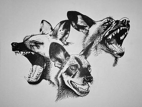 Endangered African Wild Dogs by Caitlin Mitchell