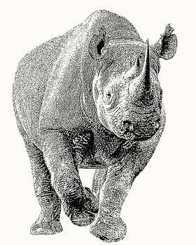 Endangered Black Rhino, Full Figure by Scotch Macaskill