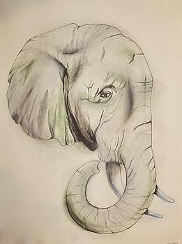 Endangered Sumatran Elephant by Caitlin Mitchell