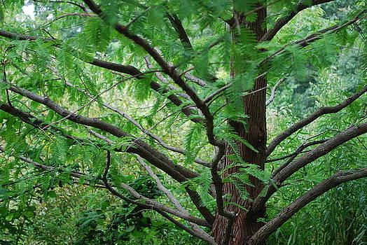 Endless Branches by Kathy Bradley