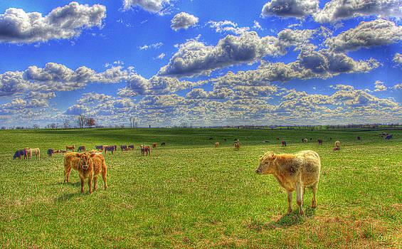 Sam Davis Johnson - Endless Cow 1