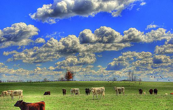Sam Davis Johnson - Endless Cow 2