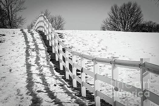 Endless Fences Landscape Photo by Melissa Fague