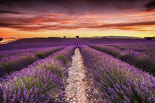 Endless fragrance by Jorge Maia