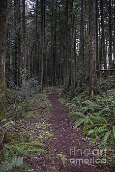 Rod Wiens - Endless Trail
