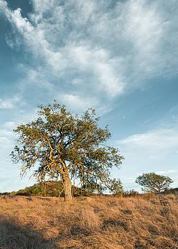 Engelmann Oak Moon by Alexander Kunz