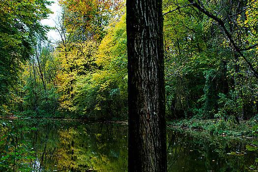 Englischer Garten II by Nicolas Artola