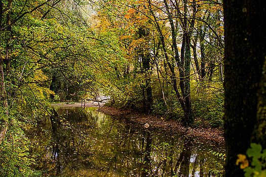 Englischer Garten III by Nicolas Artola