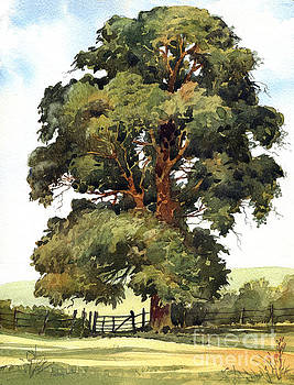 English Elm by Anthony Forster