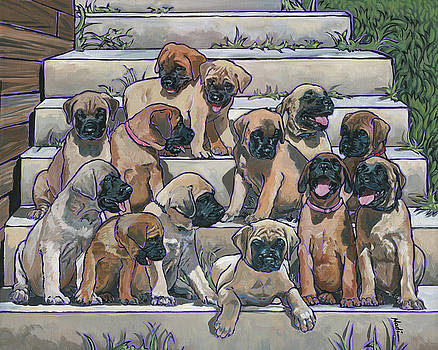 English Mastiff Puppies by Nadi Spencer