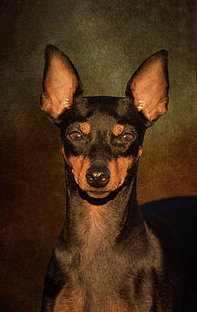 English Toy Terrier by Diana Andersen