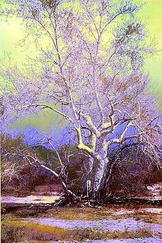 Enhanced Cottonwood Tree by M Diane Bonaparte