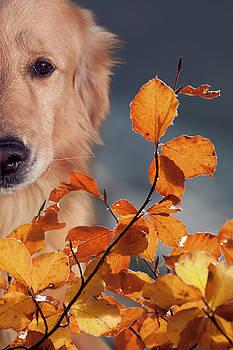 Hernan Bua - Enjoying the fall