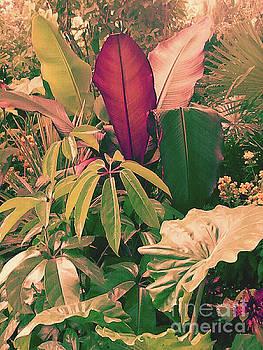 Enlightened Jungle by Rebecca Harman
