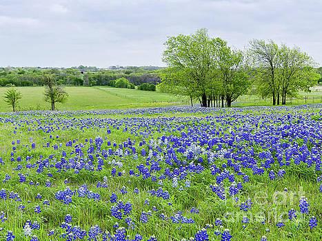 Ennis, Texas by Cathy Alba