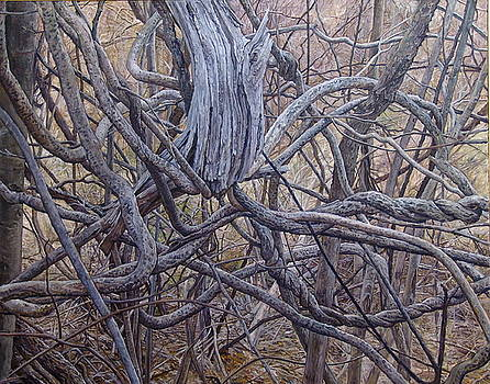 Entanglements by James Sparks