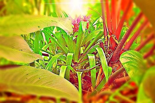 Enter the Garden by Mindy Newman